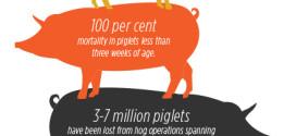 Pig Virus